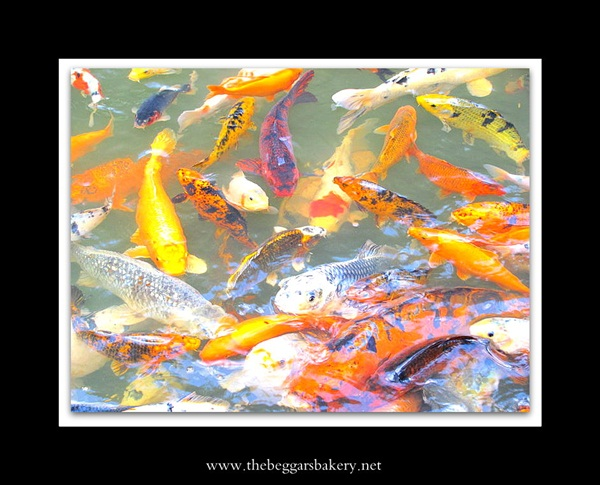 Big fish in a little pond the beggar 39 s bakery for Big fish little pond