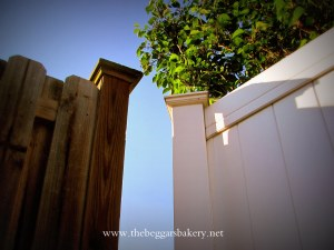 Fences Watermarked