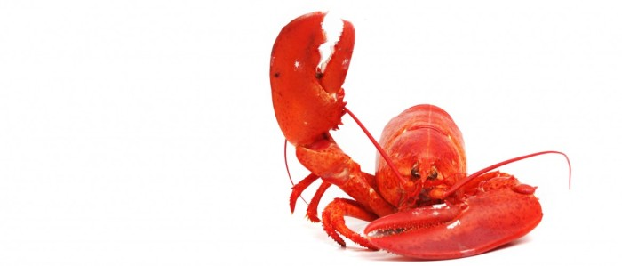 Somebody get this lobster a mike!