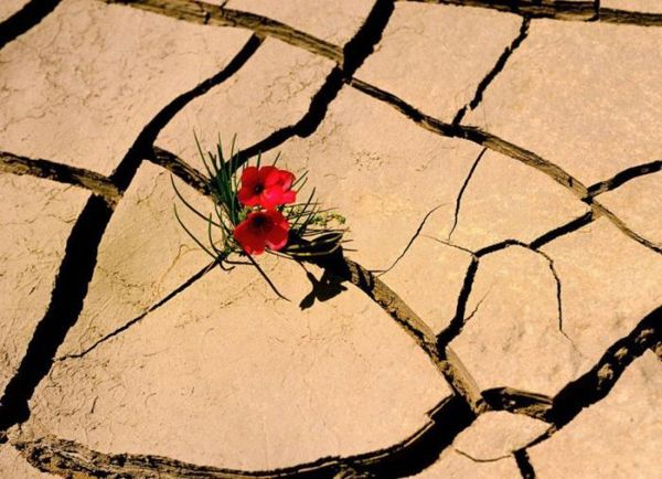 flowers-growing-out-of-the-concrete-photography251.jpg