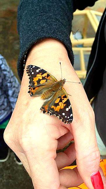 serenitybutterfly