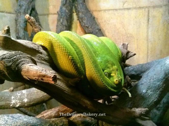 snakeloaf.jpg
